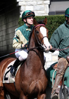 Stephanoatsee, 2013 Ben Ali, during the 2013 Keeneland Spring Meet