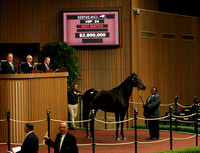 Hip 24, Harmonious, 2012 Keeneland November Sale