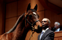 2013 Fasig-Tipton Winter Mixed Sale