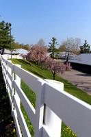 Morning scenics during the 2013 Keeneland Spring Meet