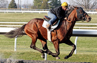 Dewey Square with Tammy Fox up works at Keeneland during the 2013 Keeneland Spring Meet