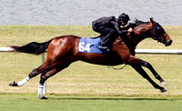 2012 Fasig-Tipton 2 Year Old Works
