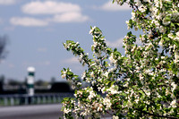 Trees during the 2013 Keeneland Spring Meet