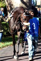Brilliant Future,  the 2012 First Lady , 2012 Keeneland Fall Meet