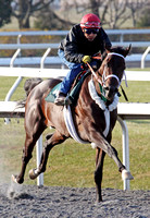 Rydilluc with Edgar Prado  up works at Keeneland during the 2013 Keeneland Spring Meet