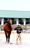 2012 March Fasig-Tipton Sale at Palm Meadows