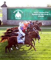Racing scenics, Starting Gate,  2012  Shadwell Turf Mile , 2012 Keeneland Fall Meet
