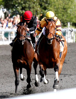 Successful Dan with Julien Leparoux up wins the 2013 Ben Ali for trainer Charlie LoPresti and owner Morton Fink during the 2013 Keeneland Spring Meet