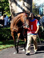 Snowfall,  the 2012 First Lady , 2012 Keeneland Fall Meet