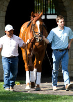 Wise Dan,  2012 Keeneland Fall Meet