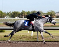 2013 Fasig-Tipton Palm Meadows Works