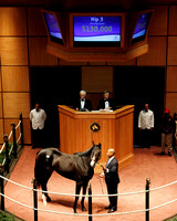 2011 Fasig-Tipton November Sale Horses