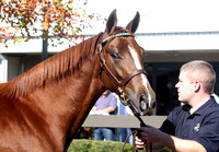 2012 Fasig-Tipton October Sale