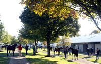 2013 Fasig-Tipton October Sale