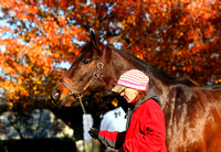 Scenics, 2012 Keeneland November Sale