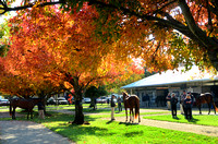 2013 Fasig-Tipton November Sale