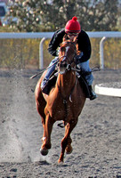 Undrafted with Azael De Leon upworks at Keeneland during the 2013 Keeneland Spring Meet