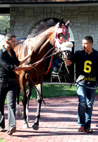 Daisy Devine,  the 2012 First Lady , 2012 Keeneland Fall Meet