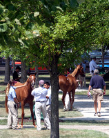 2014 Fasig-Tipton July Sale People and Scenics