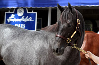 2014 Brookdale Keeneland September Sale